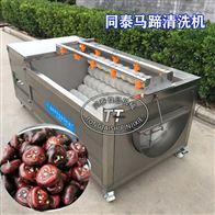 TQX-1000马蹄清洗机全自动毛刷洗胡萝卜荸荠机器