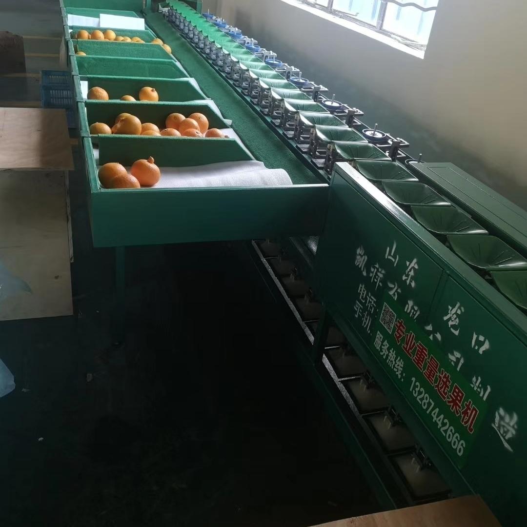 自动化西红柿选果机 厂家直销