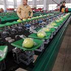 XGJ-SZ青枣分级机中国台湾枣分选设备多种水果适用
