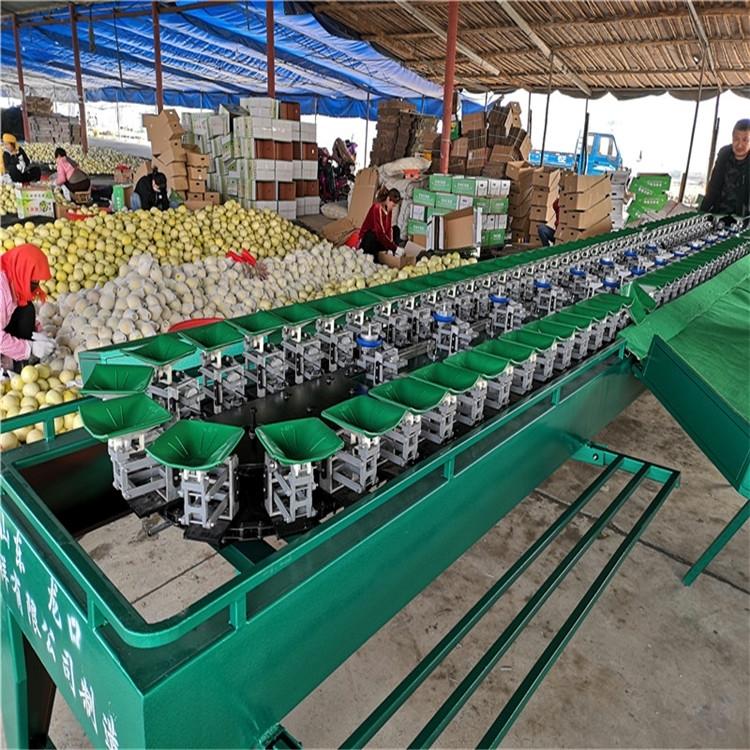 地瓜分选机河南红薯分级机果蔬重量分拣设备