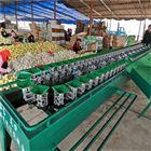 XGJ-SZ江西猕猴桃选果机挑选水果大小的机器分果机