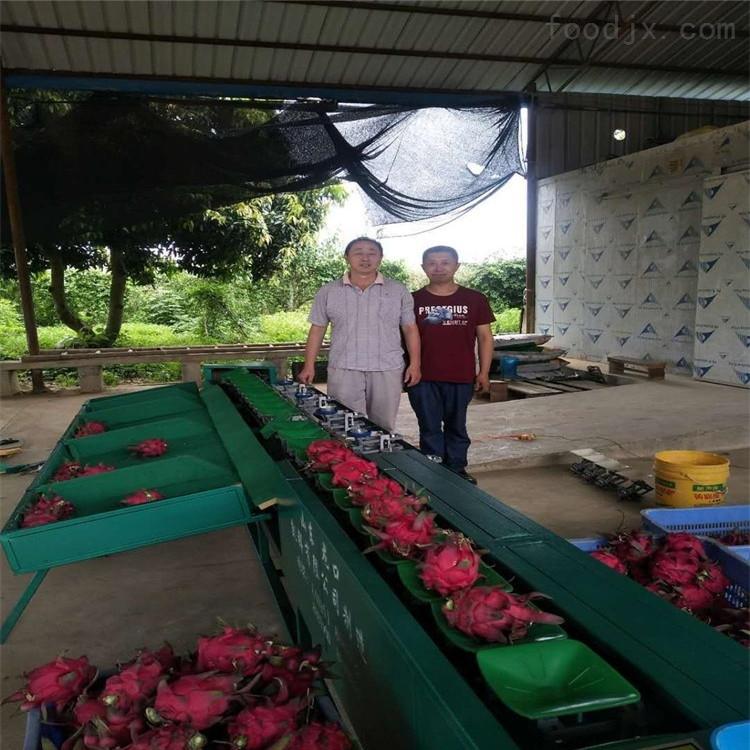 广西火龙果分选机 重量分大小 不伤叶柄