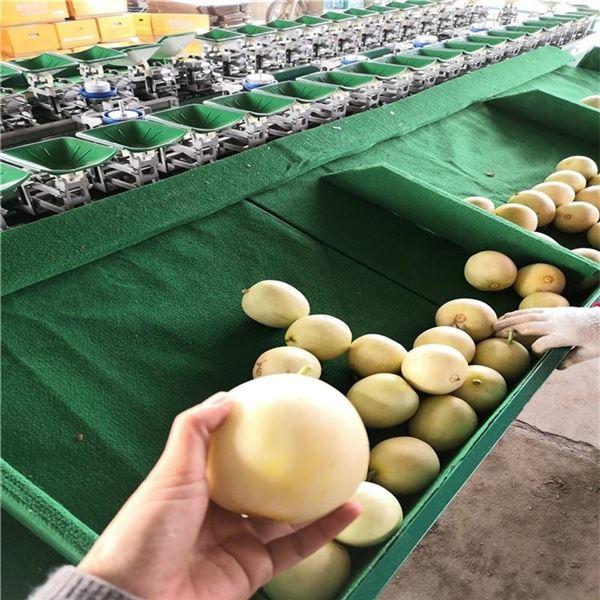 梨分级设备山东水果选果机供应商一机多用