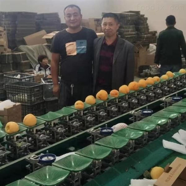 湖南怀化猕猴桃分级设备 水果选果机分果机