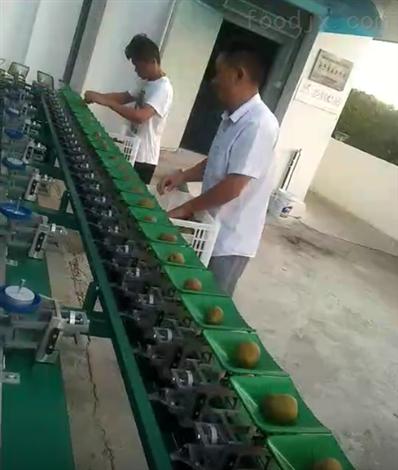 安徽猕猴桃分选机 水果选果机分级机