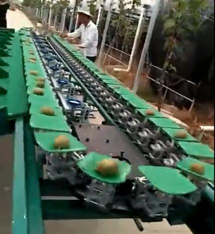 江西猕猴桃选果机挑选水果大小的机器分果机