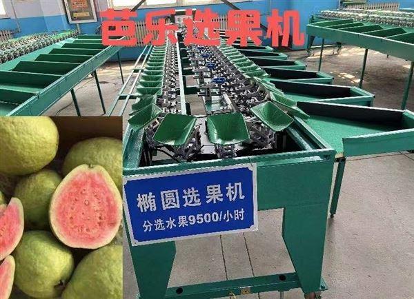 贝贝南瓜分级机果蔬分选设备便宜实惠