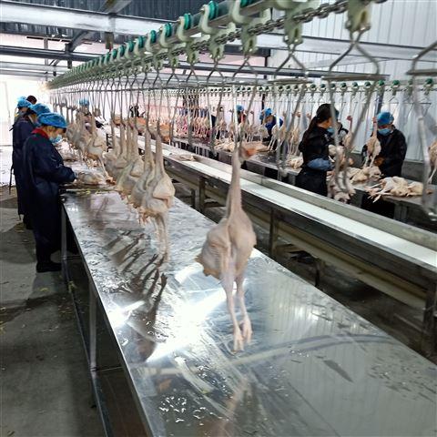 鸭宰杀流水线设备家禽自动屠宰生产线定制