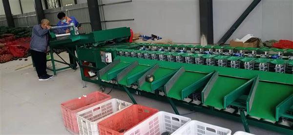 贝贝南瓜分级机 专业分大小的机器 潍坊卖么