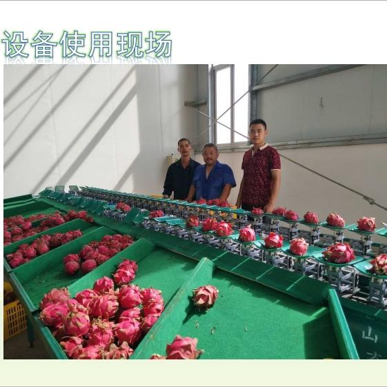 广西火龙果选果机 重量分大小  不伤鳞片