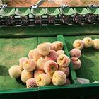 XGJ-Z河北深州水蜜桃分选机  重量分选果实大小
