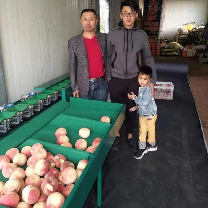 奉化水蜜桃选果机  高效分选 不伤果的机器