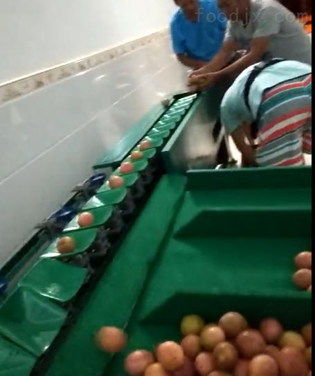 博山猕猴桃产区专用的水果分选机