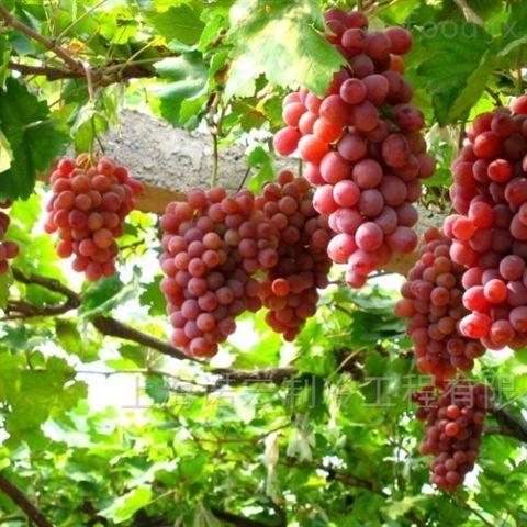 葡萄如何在冷库中贮藏/上海冷库安装
