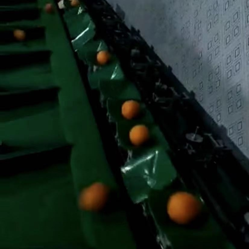 象山红美人柑橘分选机  不伤果