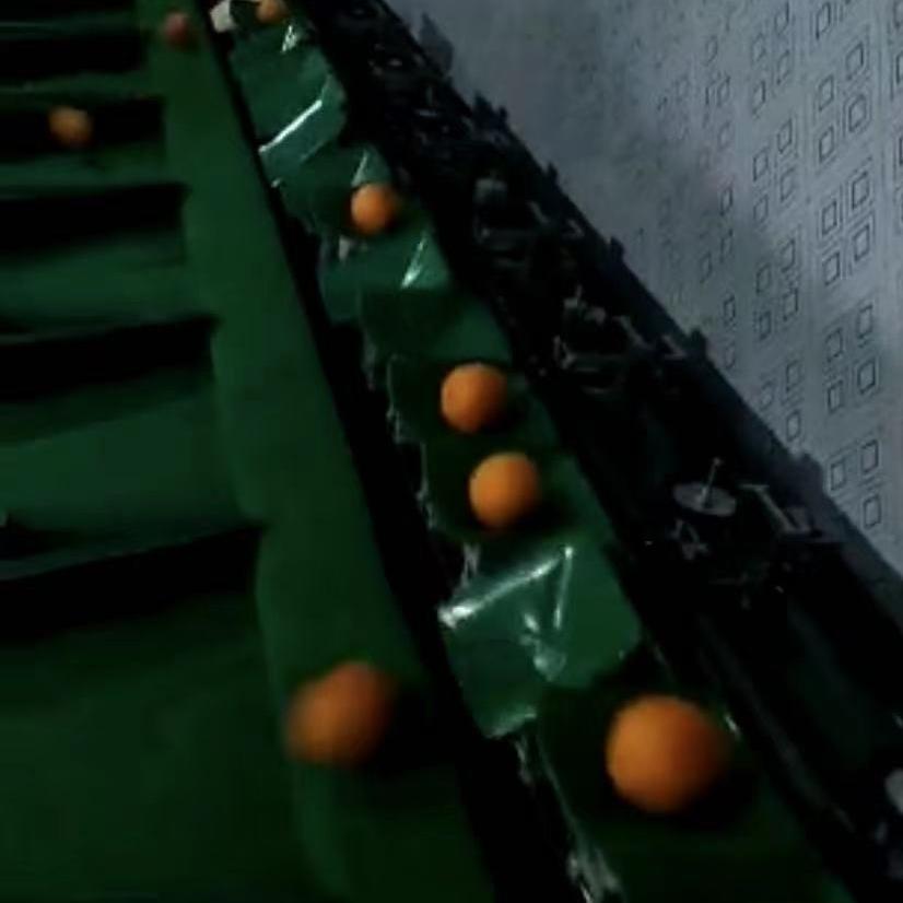 上海金山红美人柑橘选果机  不伤果