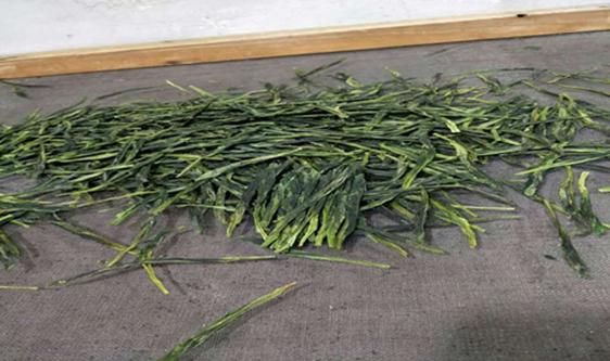四項綠茶生產線裝配技術標準意見征求 提高茶葉加工品質
