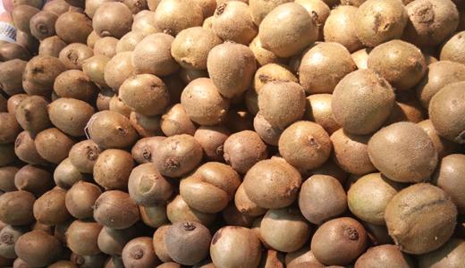 《獼猴桃保鮮儲存運輸規范》征求意見 為水果保質保鮮注入力量