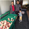XGJ-Z湖北孝感早蜜桃选果机 不伤果的水果分选机